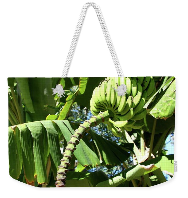Banana Tree Weekender Tote Bag featuring the photograph Banana Tree by Christiane Schulze Art And Photography