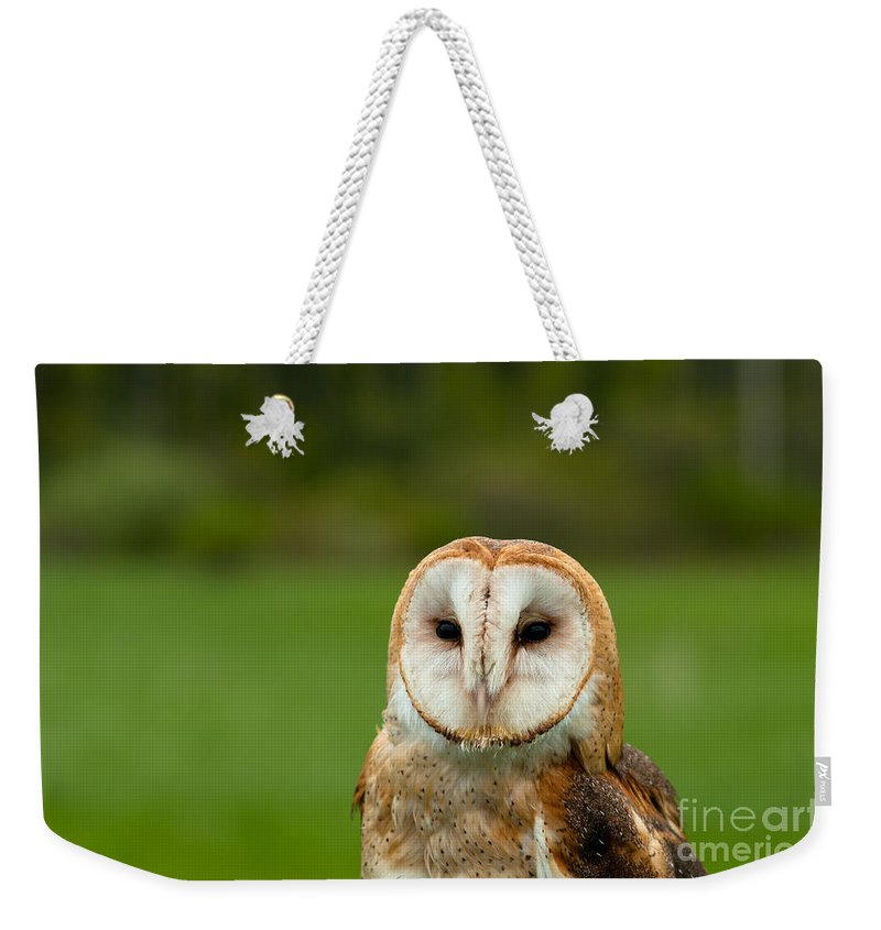 Barn Weekender Tote Bag featuring the photograph Barn Owl by Les Palenik