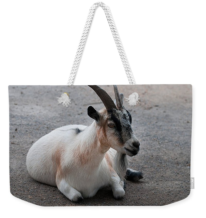 Goat Weekender Tote Bag featuring the photograph Barnyard Goat by Photos By Cassandra