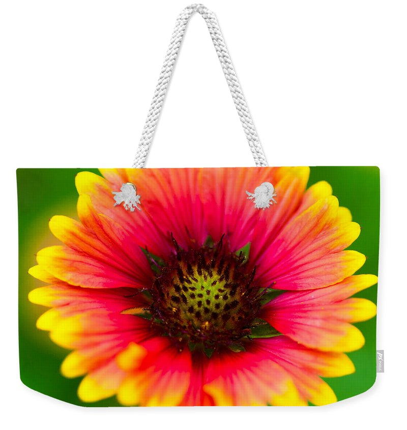 Gerbera Daisy Weekender Tote Bag featuring the photograph Beautiful Daisy by Raul Rodriguez