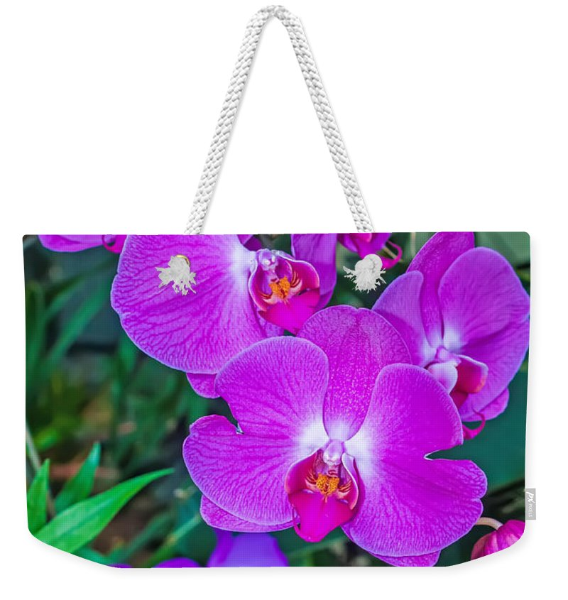 White Weekender Tote Bag featuring the photograph Beautiful Purple Orchid - Phalaenopsis by Alex Grichenko