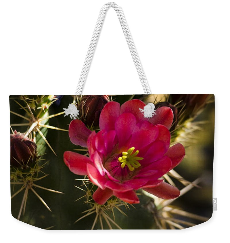 Arizona Weekender Tote Bag featuring the photograph Beauty In The Desert by Saija Lehtonen