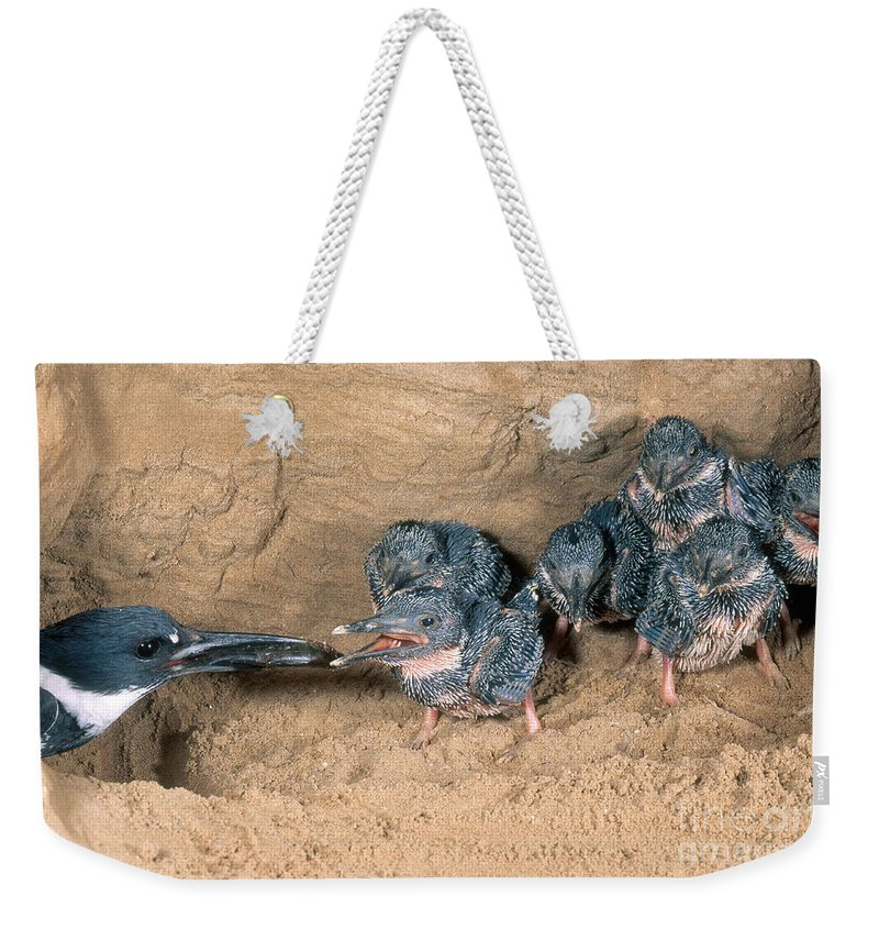 Belted Kingfisher Weekender Tote Bag featuring the photograph Belted Kingfisher by Anthony Mercieca