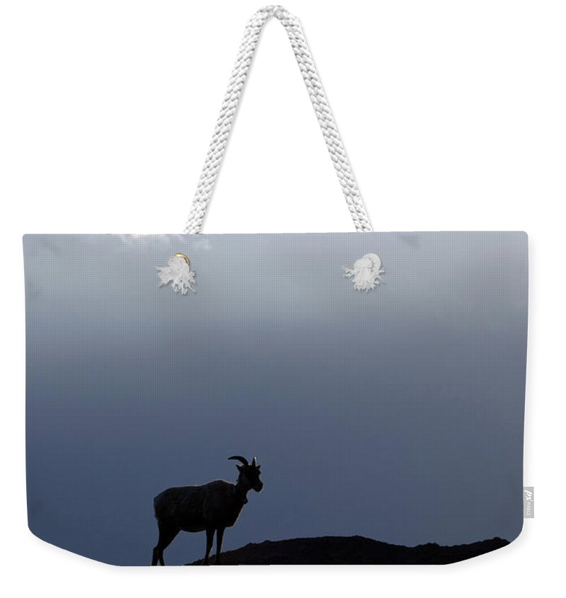 Badlands National Park Weekender Tote Bag featuring the photograph Big Horned Sheep Badlands National Park by Jason O Watson