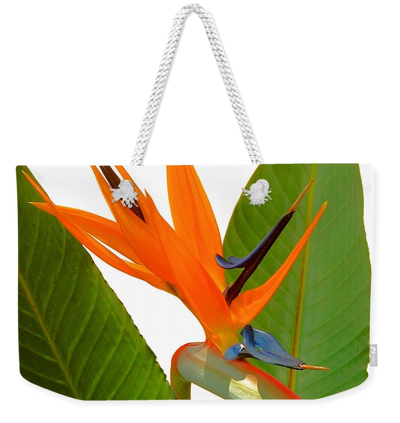 Nature Weekender Tote Bag featuring the photograph Bird Of Paradise by Peg Urban
