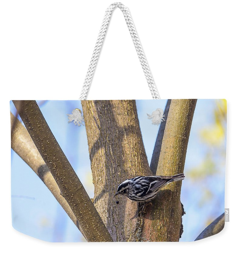 Animal Weekender Tote Bag featuring the photograph Black And White Warbler by Jack R Perry