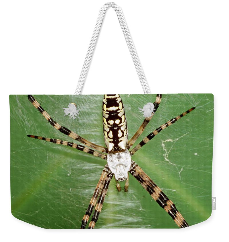 Nature Weekender Tote Bag featuring the photograph Black And Yellow Garden Spider by Millard H. Sharp