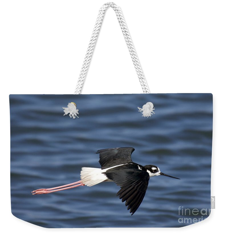 Black-necked Stilt Weekender Tote Bag featuring the photograph Black-necked Stilt by Anthony Mercieca