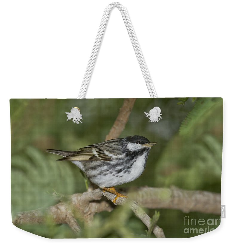 Blackpoll Warbler Weekender Tote Bag featuring the photograph Blackpoll Warbler by Anthony Mercieca
