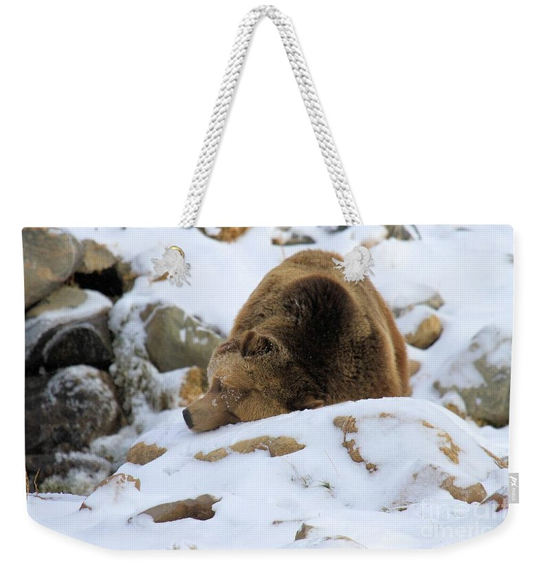 Grizzly Bear Weekender Tote Bag featuring the photograph Blending In by Adam Jewell