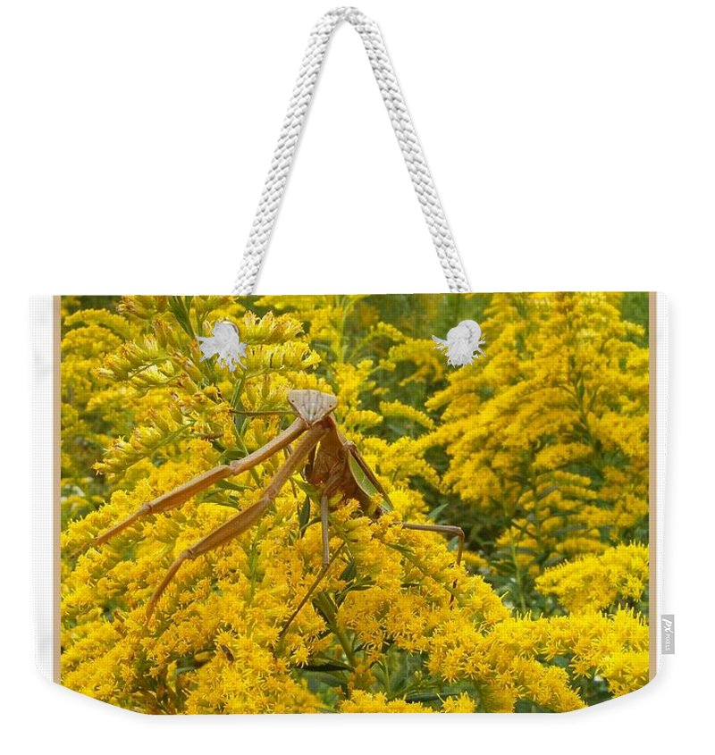Praying Weekender Tote Bag featuring the photograph Blending In by Sara Raber
