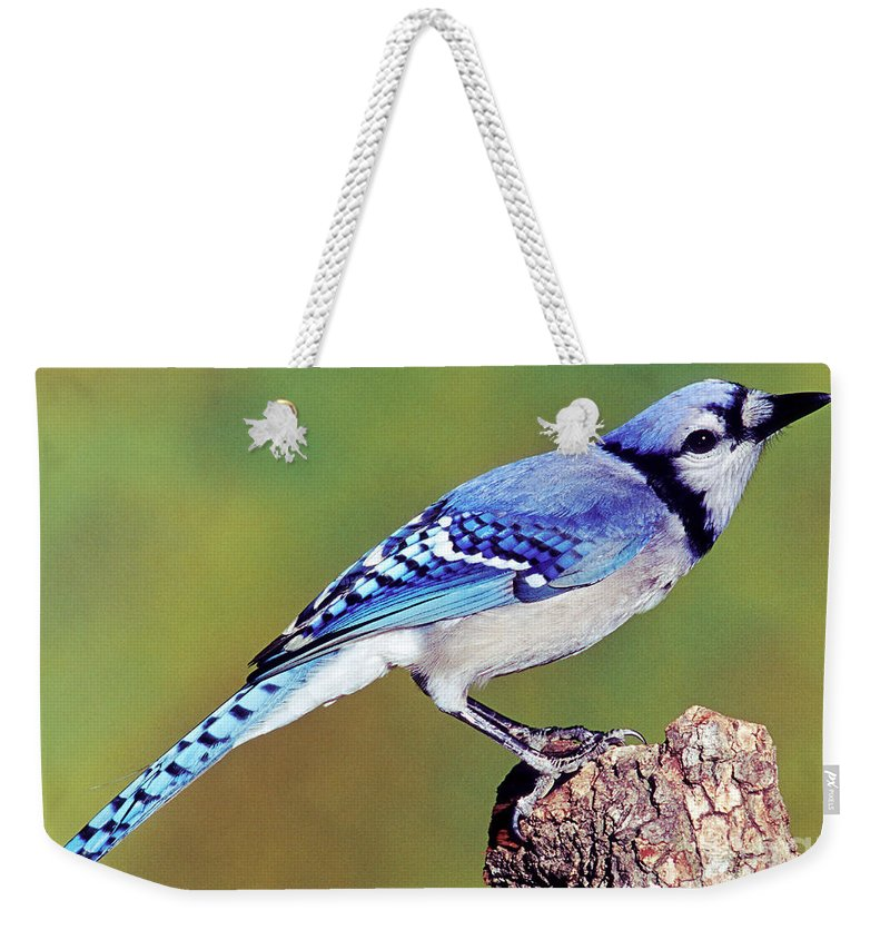 Blue Jay Weekender Tote Bag featuring the photograph Blue Jay by Millard H. Sharp