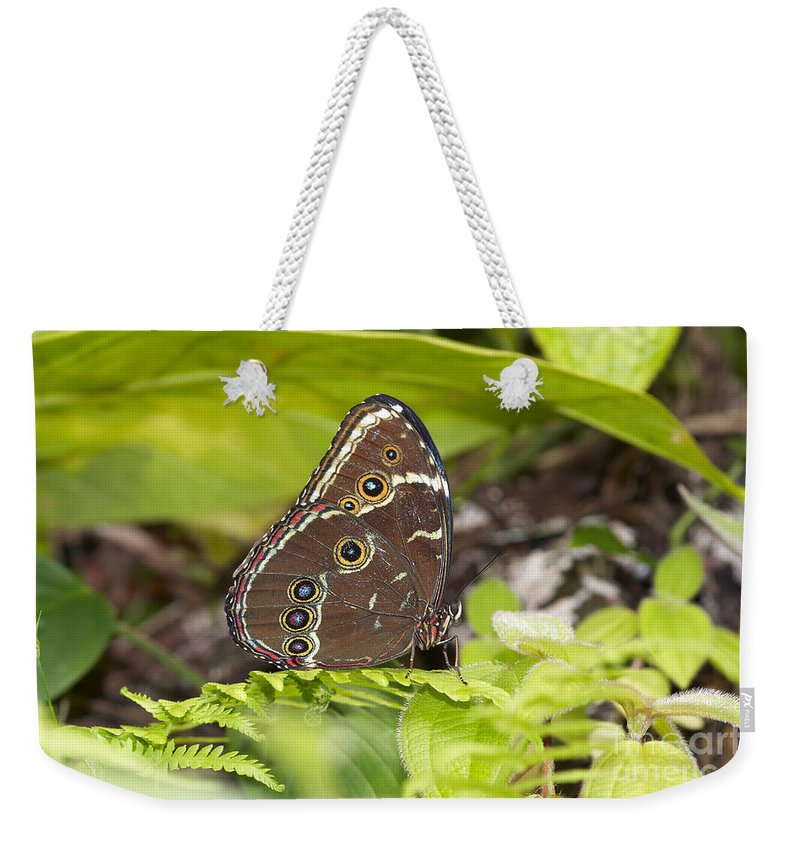 Butterfly Weekender Tote Bag featuring the photograph Blue Morpho Butterfly by Michal Boubin