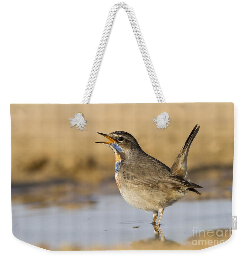 Bluethroat Weekender Tote Bag featuring the photograph Bluethroat Luscinia Svecica by Eyal Bartov