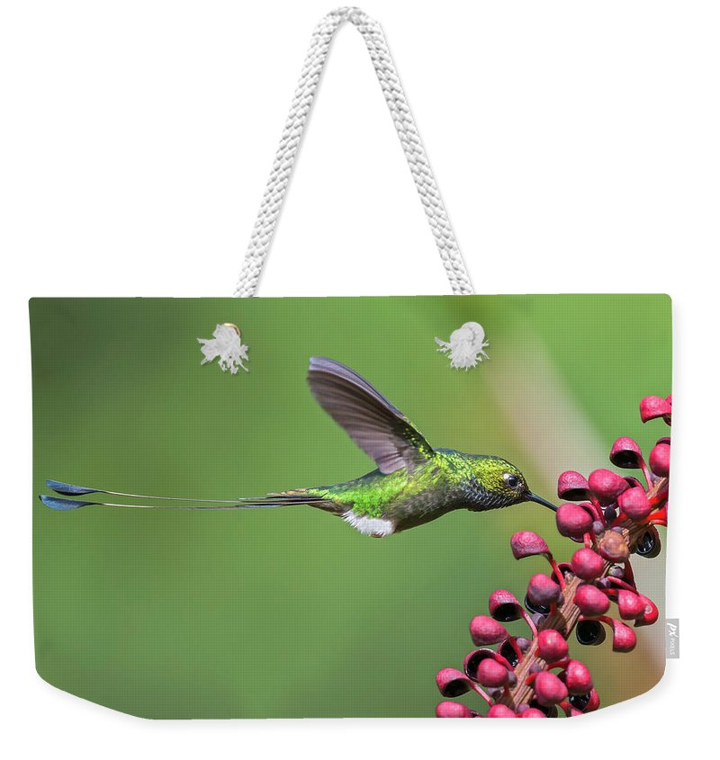 Birds Weekender Tote Bag featuring the photograph Booted Racket-tail by Juan Jose Arango