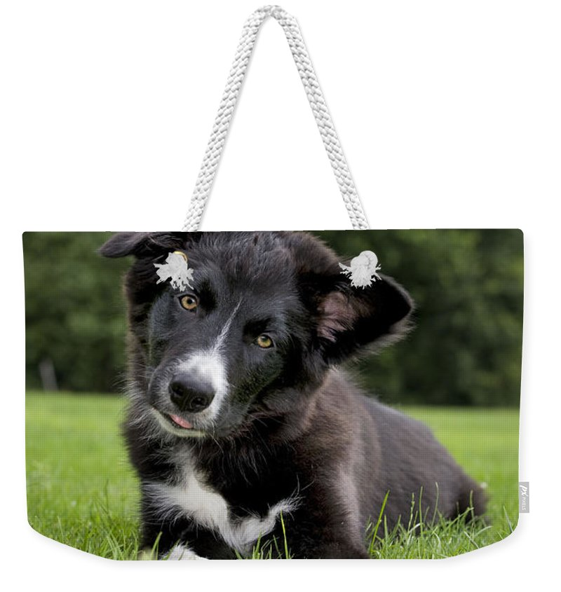 Border Collie Puppy Dog Weekender Tote Bag for Sale by Johan De Meester 1ac88ebb50e82