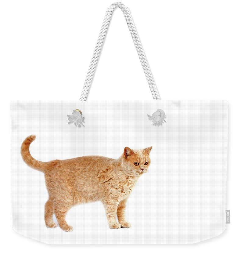 Adult Weekender Tote Bag featuring the photograph British Shorthair Creme by Gerard Lacz