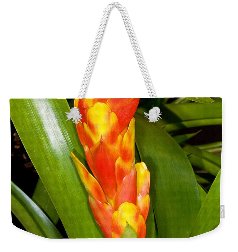 Nature Weekender Tote Bag featuring the photograph Bromeliad Flower by Millard H. Sharp