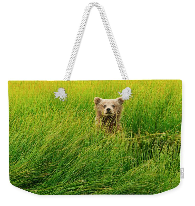 Brown Bear Weekender Tote Bag featuring the photograph Brown Bear Cub, Lake Clark National by Mint Images/ Art Wolfe