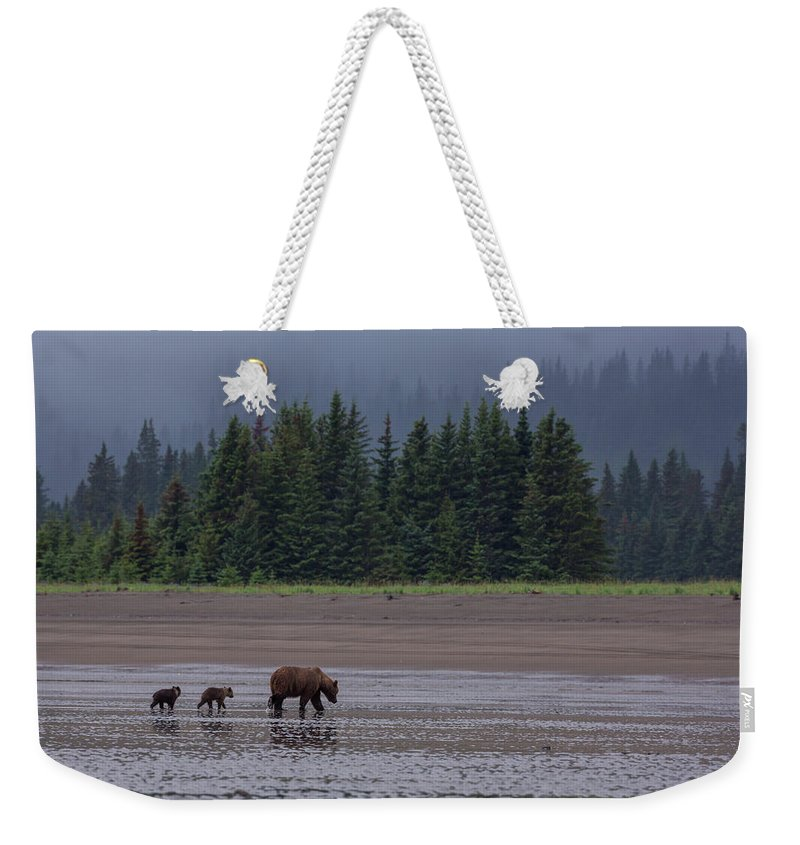 Brown Bear Weekender Tote Bag featuring the photograph Brown Bear In Lake Clark National Park by Gavriel Jecan