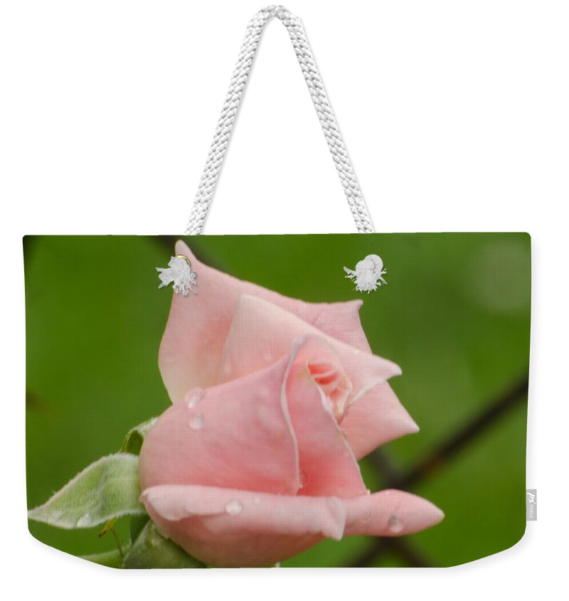 Rose Weekender Tote Bag featuring the photograph Budding by Donna Brown