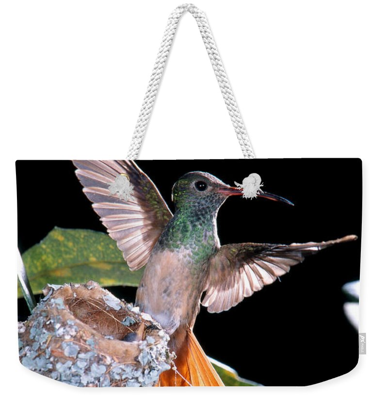 Buff-bellied Hummingbird Weekender Tote Bag featuring the photograph Buff-bellied Hummingbird At Nest by Anthony Mercieca