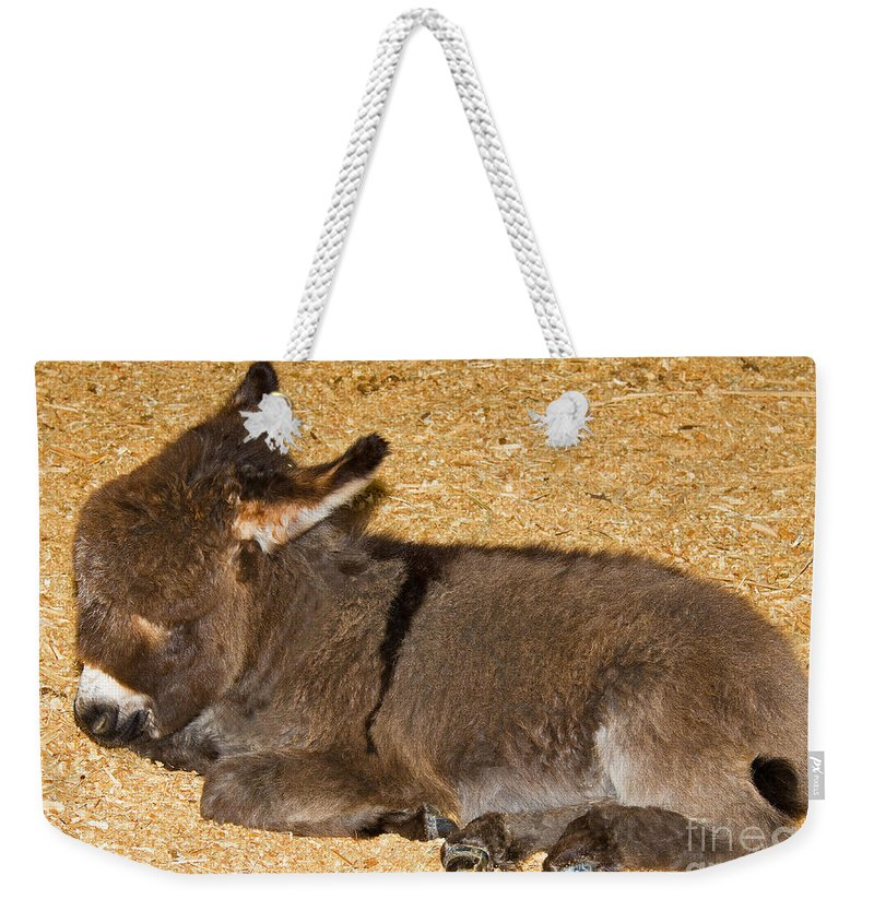 Nature Weekender Tote Bag featuring the photograph Burro Foal by Millard H. Sharp