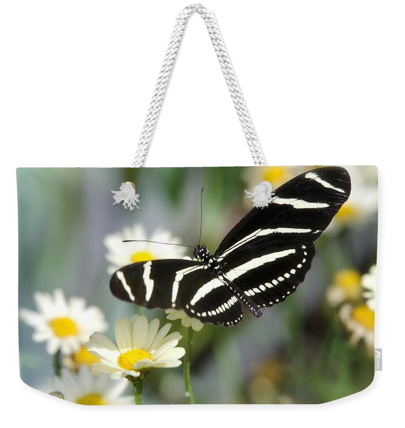 Heliconius Charithonia Weekender Tote Bag featuring the photograph Butterfly Dreams by Saija Lehtonen