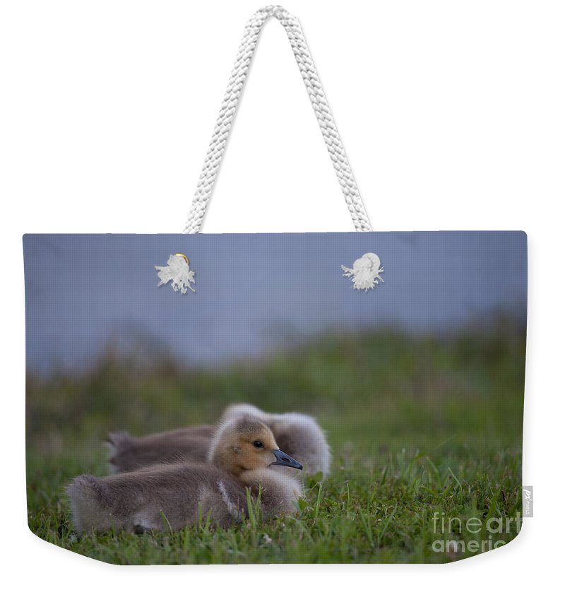 Gosling Weekender Tote Bag featuring the photograph By The Pond by Dale Powell