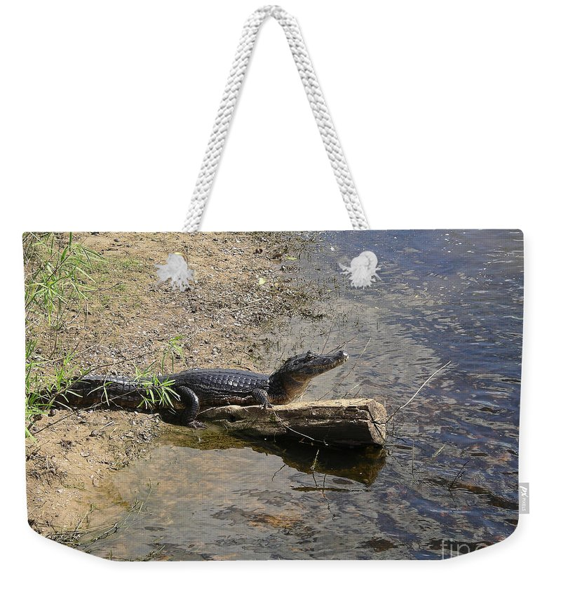 Animals Weekender Tote Bag featuring the digital art Caiman by Carol Ailles