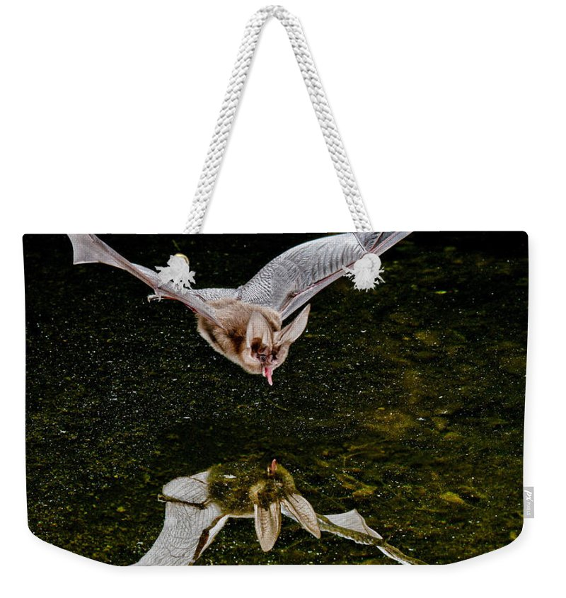Animal Weekender Tote Bag featuring the photograph California Leaf-nosed Bat At Pond by Anthony Mercieca