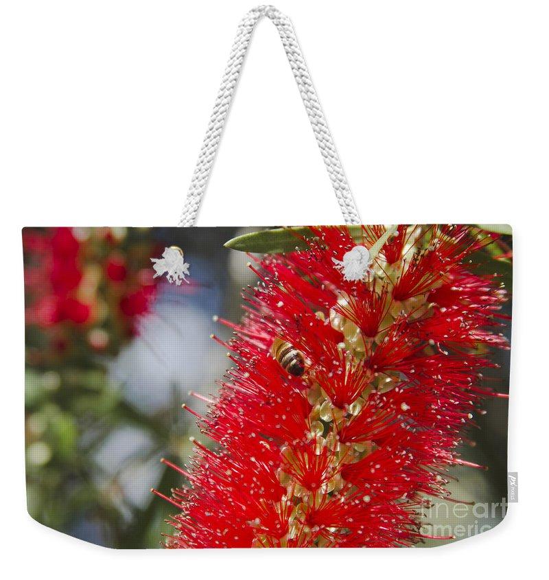 Weekender Tote Bag featuring the photograph Callistemon Citrinus - Crimson Bottlebrush by Sharon Mau