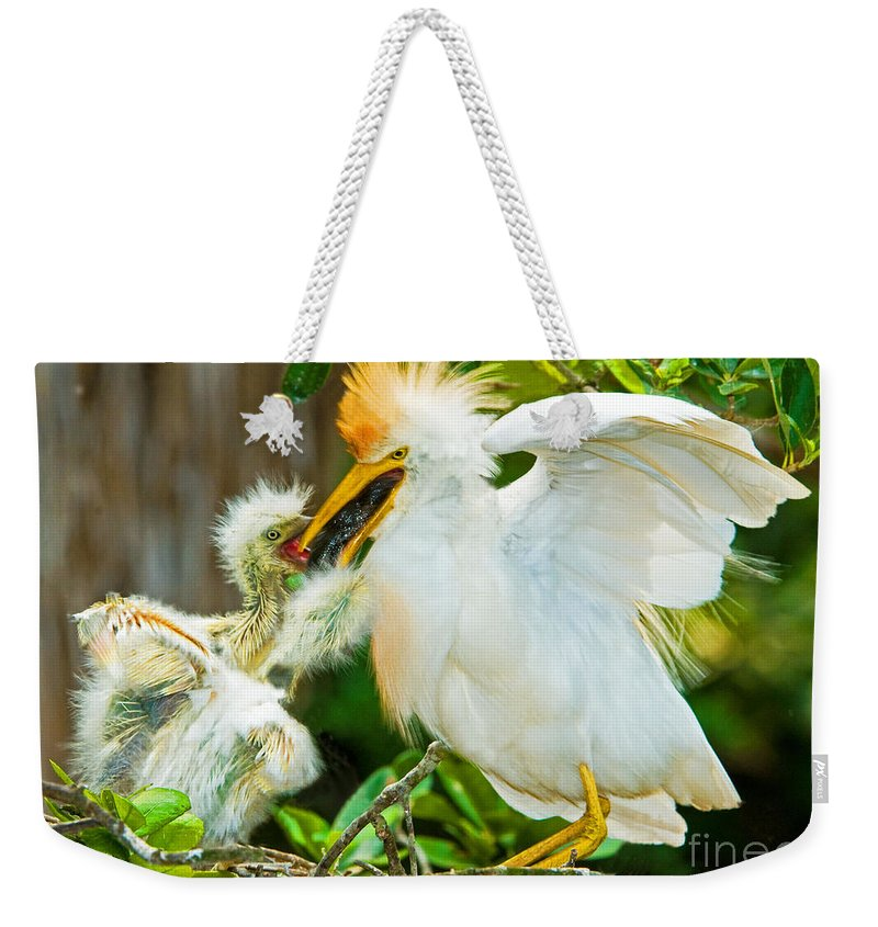 Animal Weekender Tote Bag featuring the photograph Cattle Egret With Young In Nest by Millard H. Sharp