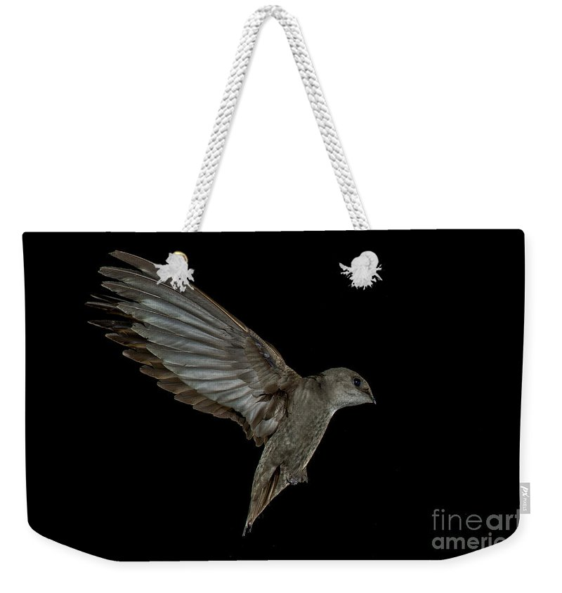 Chimney Swift Weekender Tote Bag featuring the photograph Chimney Swift by Anthony Mercieca