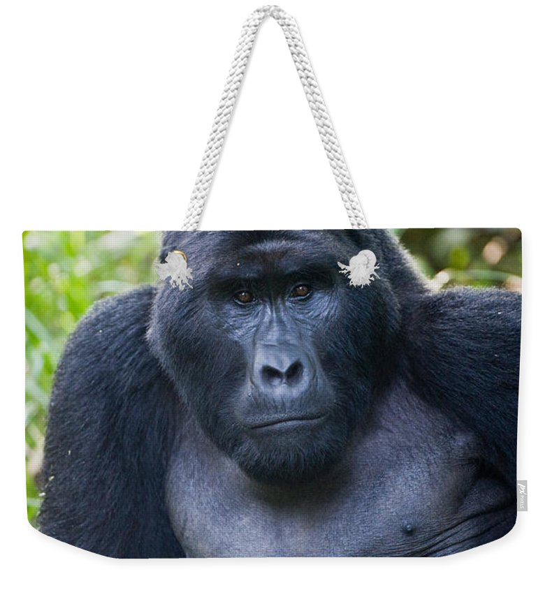 Photography Weekender Tote Bag featuring the photograph Close-up Of A Mountain Gorilla Gorilla by Panoramic Images