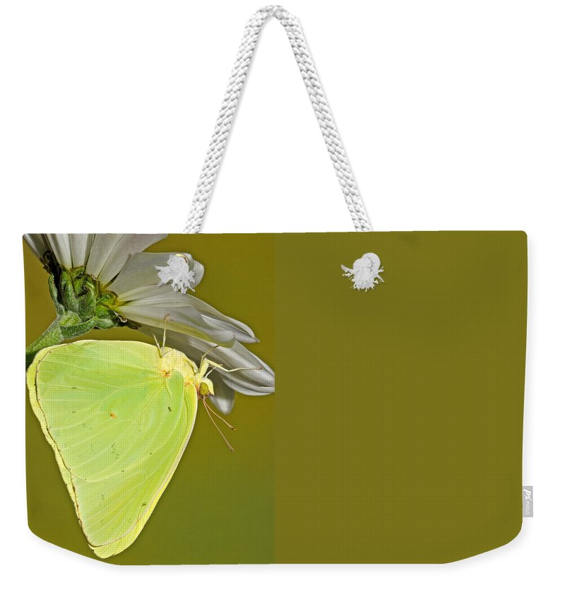 Animal Weekender Tote Bag featuring the photograph Cloudless Sulphur Butterfly by Millard H Sharp