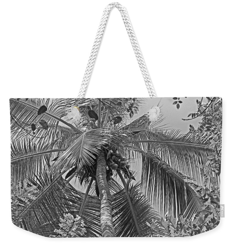 Coconut Palm Weekender Tote Bag featuring the photograph Coconut Palm by Tony Murtagh
