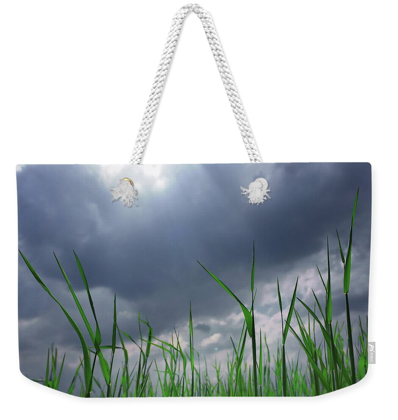 Thunderstorm Weekender Tote Bag featuring the photograph Corn Plant With Thunderstorm Clouds by Silvia Otte