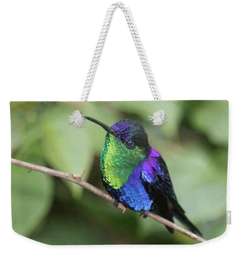 Travel Weekender Tote Bag featuring the photograph Crowned Woodnymph Hummingbird Male by Hal Beral