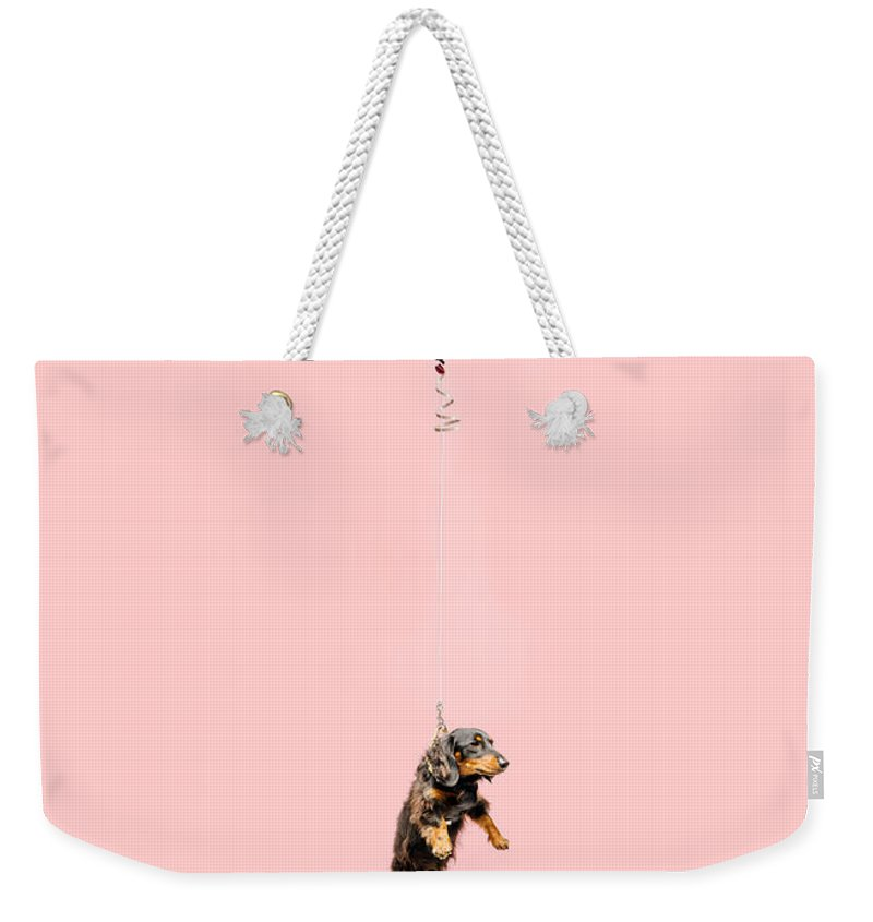 Pets Weekender Tote Bag featuring the photograph Cute Dog Tied To A Balloon And Floating by Ian Ross Pettigrew