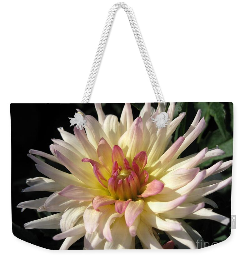 Dahlia Weekender Tote Bag featuring the photograph Dahlia Named Camano Ariel by J McCombie