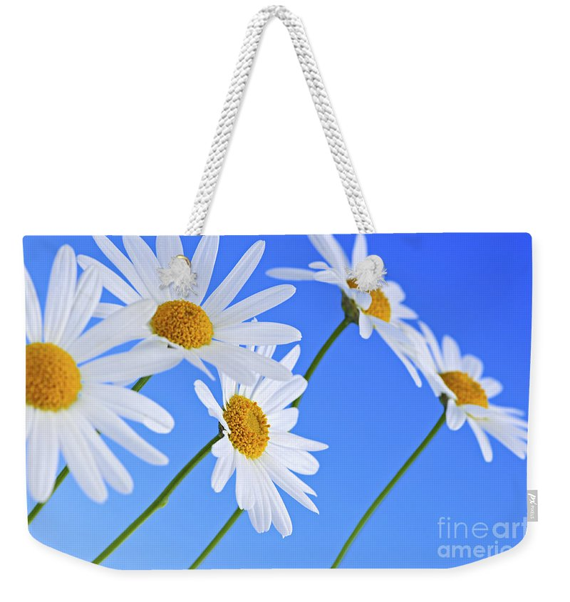 Daisy Weekender Tote Bag featuring the photograph Daisy Flowers On Blue Background by Elena Elisseeva