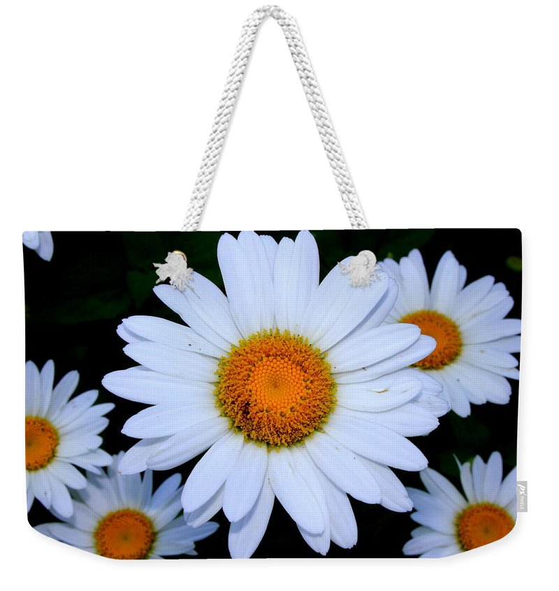 White Daisy Weekender Tote Bag featuring the photograph Daisy by Shannon Louder