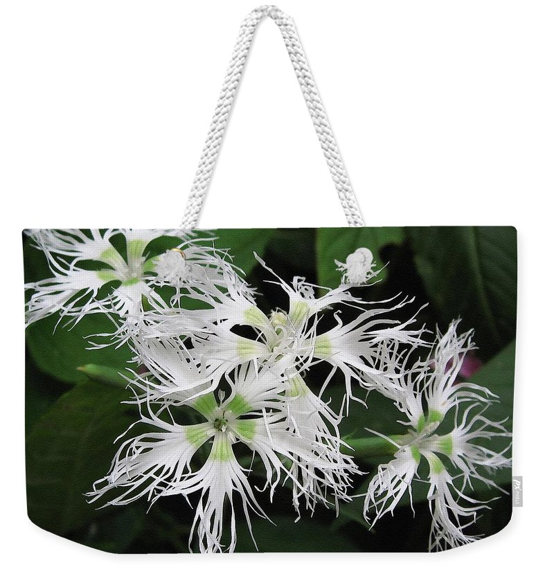 Dianthus Weekender Tote Bag featuring the painting Dianthus Superbus - White by J McCombie