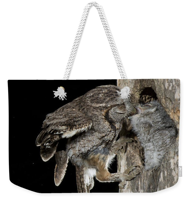 Eastern Screech Owl Weekender Tote Bag featuring the photograph Eastern Screech Owls At Nest by Anthony Mercieca