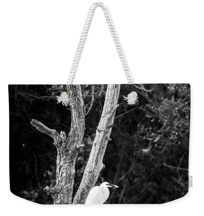 Birds Weekender Tote Bag featuring the photograph Egret by Steven Ralser
