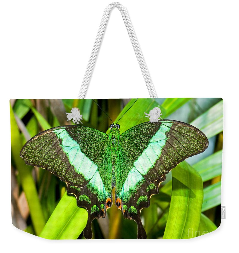 Nature Weekender Tote Bag featuring the photograph Emerald Swallowtail Butterfly by Millard H. Sharp
