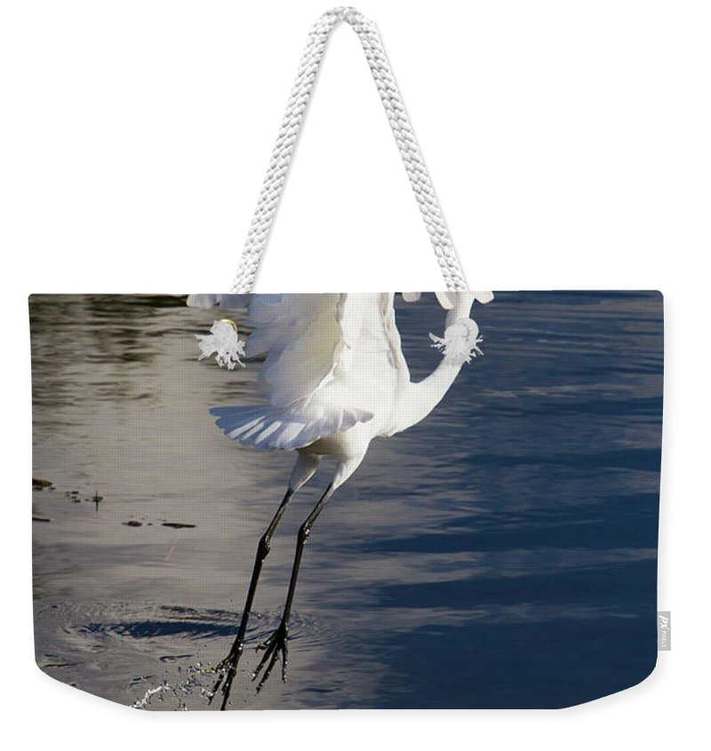 Heron Weekender Tote Bag featuring the photograph Everglades by Jose More