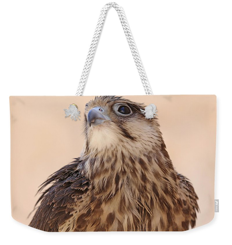 Falcon Weekender Tote Bag featuring the photograph Falcon by Paul Fell