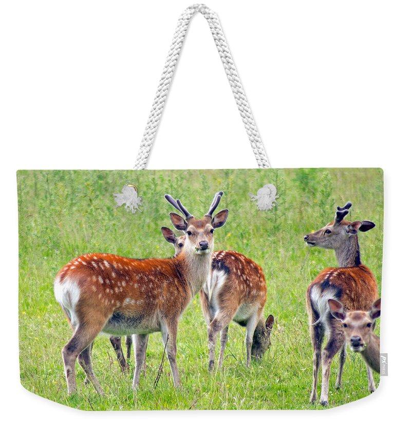Fallow Deer Weekender Tote Bag featuring the photograph Fallow Deer by Tony Murtagh